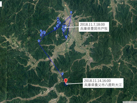 GPS情報 J0097♂・J0015♀ 2018.11.7.16:00,18:00~2018.11.14.16:00