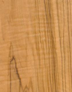 58-西班牙橄欖木OLIVE-TREE