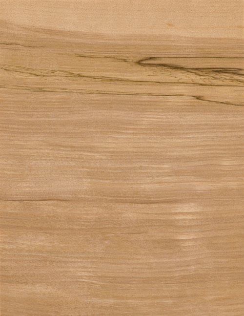 59-美洲菌化白樺MILDEN-ROT-BIRCH