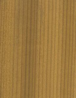 45-金絲柚GOLD-TEAK
