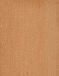 14-紅山毛RED-BEECH