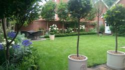 Walled Garden in Summer