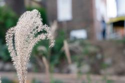 winter seed head grasses