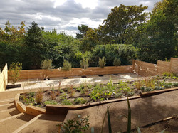 View just after planting