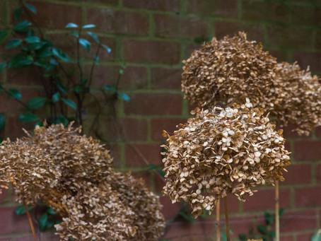 Winter Gardening Advice: 5 quick tips
