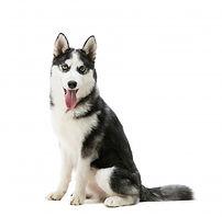 husky-dog-breed_143092-6.jpg