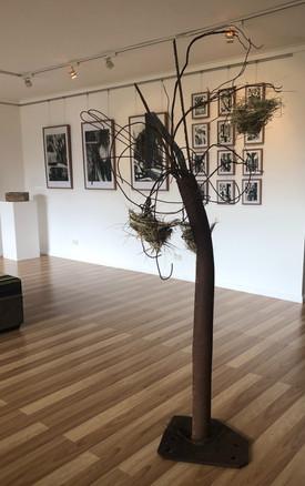 A Poatina Tree