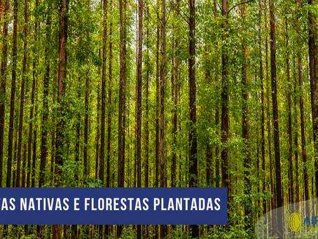 Florestas Nativas e Florestas Plantadas: Entenda a diferença!