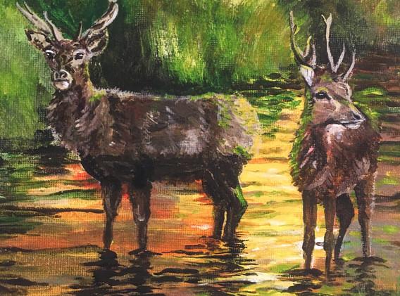 Richmond Deer at Sunset