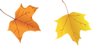 leaves-1634105_1280.png