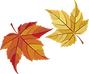 maple-leaves-482678_1280.png