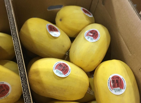 Summer and Winter Squash:  Growing, Harvesting and Storage Tips