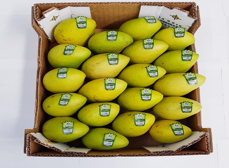 Fresh Mango Treat from Mexican Suppliers or Distributors