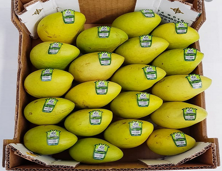 Mexican Mango Exports on the Road to Recovery after COVID-19 Pandemic