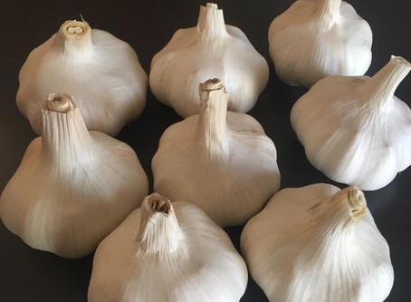 Easy-to-Follow Tips to Start a Profitable Garlic Growing Business