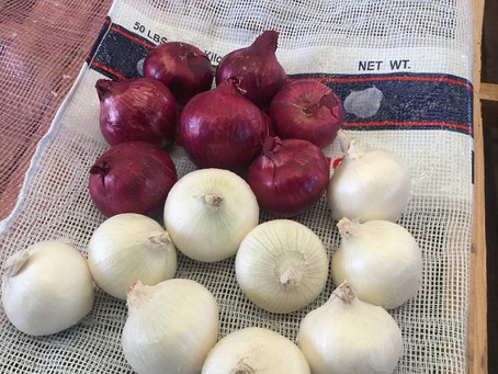 Enrich your Life with Onions from Fresh Onion Suppliers in Mexico