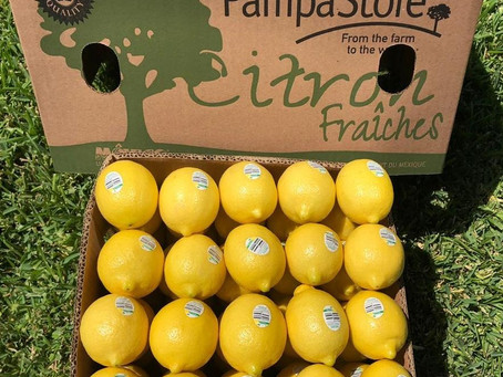 Buzzing Benefits of Introducing Lemons to Your Daily Life