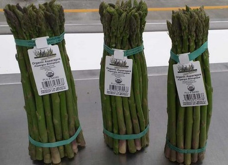 Interesting Facts about Asparagus along with its Cooking Techniques and Recipes