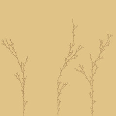 L-System Trees