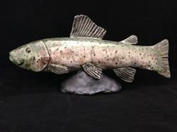 Rainbow Trout 2