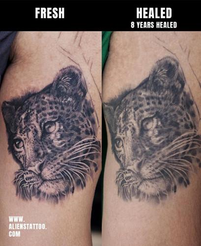 Healed-tiger-realistic-portrait-tattoo-I