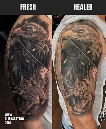 Healed-eagle-tiger-coverup-tattoo-Insta.
