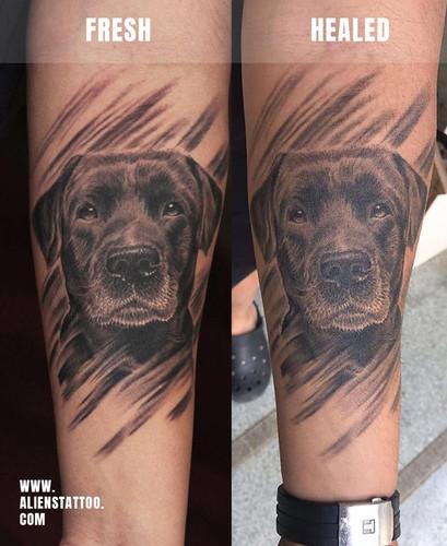 Healed-dog-portrait-allan-Insta.jpg