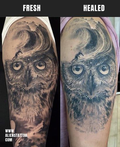 Healed-owl-sleeve-traveller-tattoo-Insta