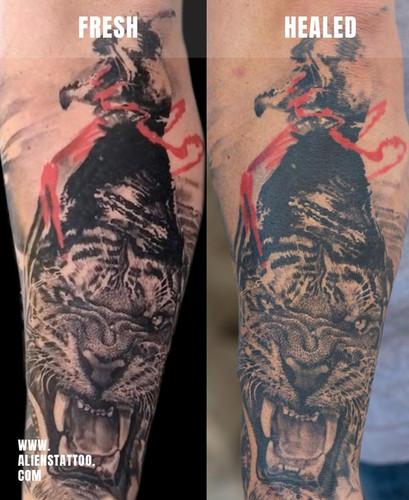 Healed-tiger-tino-Insta.jpg