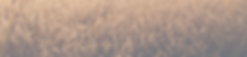 banner2_edited.png