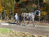Ausbildung Pferd.jpg