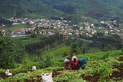 Potato Farmers of Rwanda | IFAD