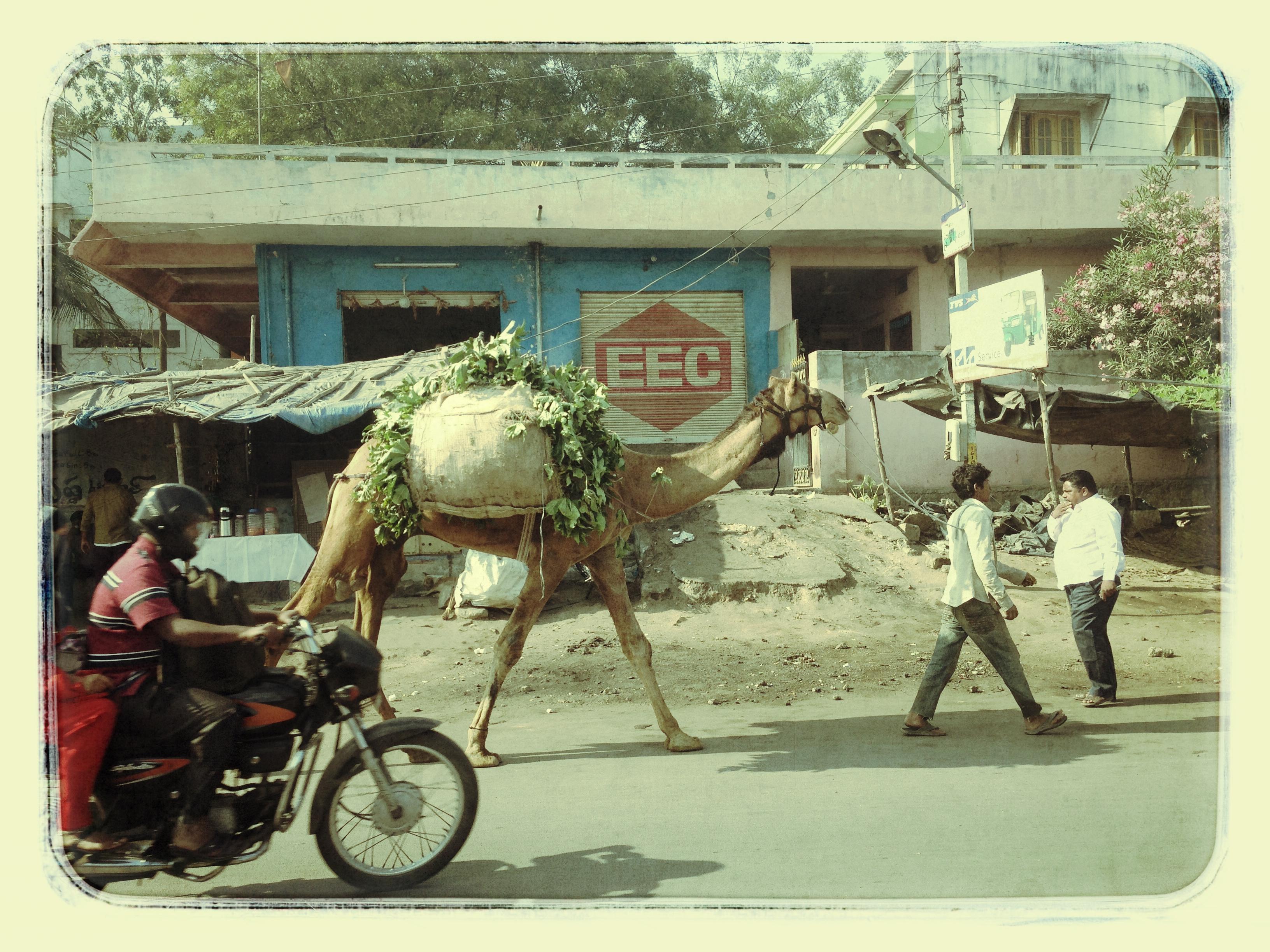 patna | india | 2013