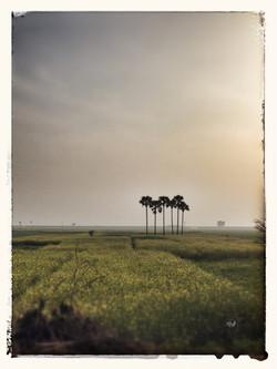 indian fields