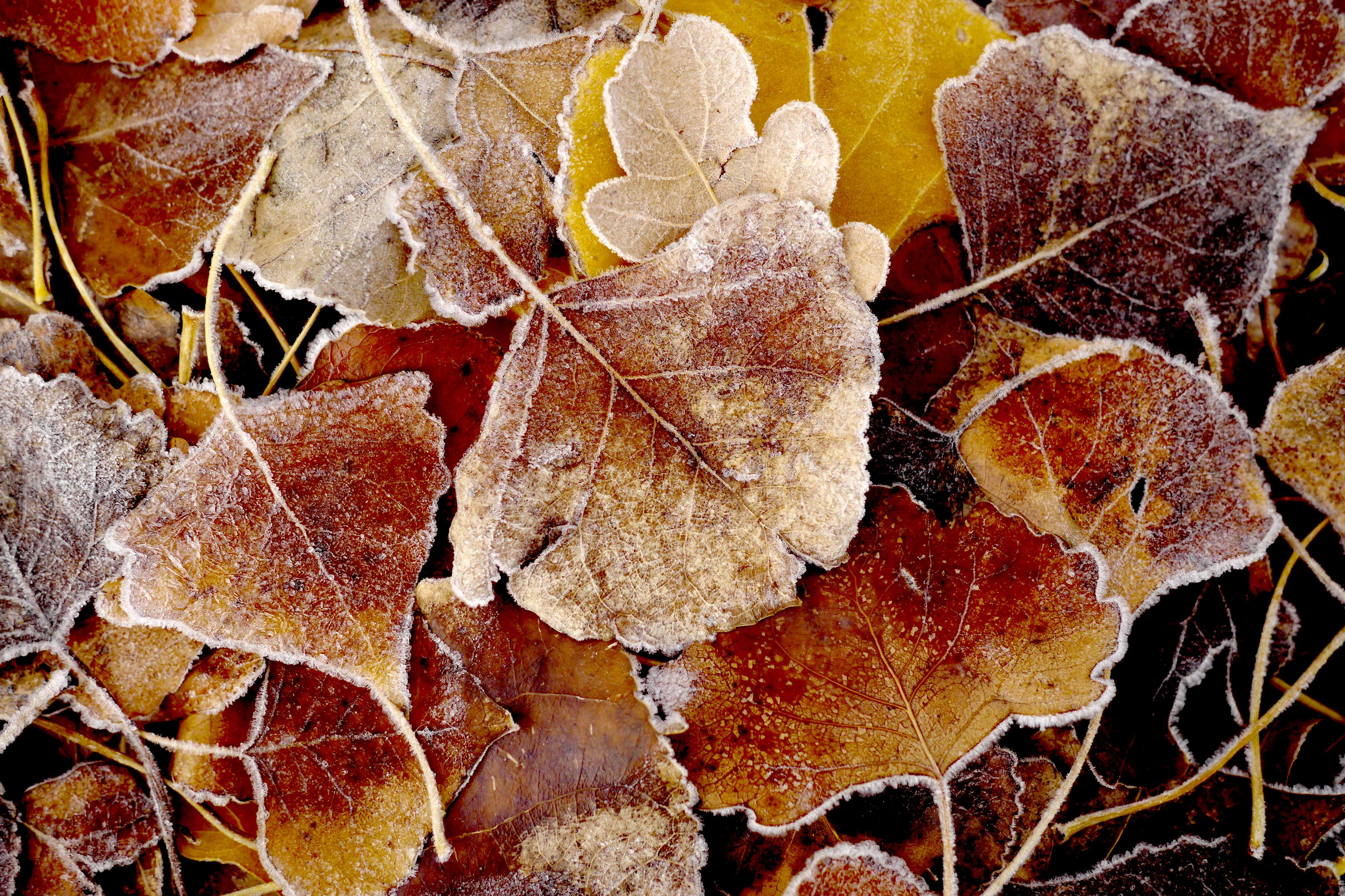 cederberg frost | 2015