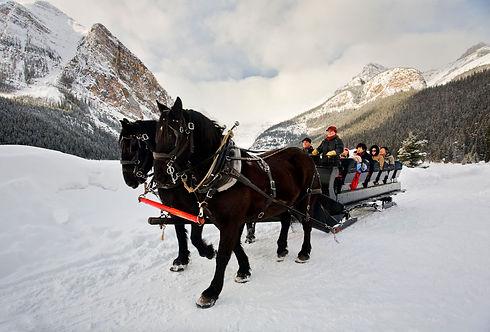Horse_Sleigh_Ride_Lake_Louise_Paul_Zizka