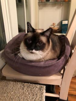 Fat cat in donut bed