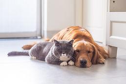 Dog and Cat asleep.jpg
