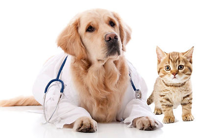 Assurance animaux chien chat