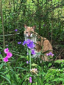 cat behind fence eidt.jpg