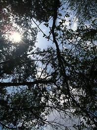 sky pines view.jpg