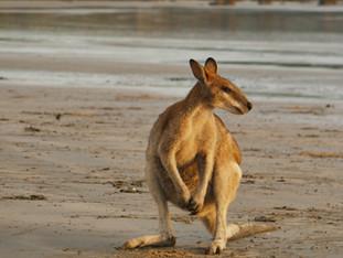 AUSTRALIA ON THE ROAD: ITINERARIO DI 3 SETTIMANE