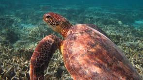 LADY ELLIOT ISLAND: UN PARADISO NEL MARE DEI CORALLI