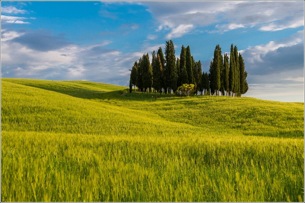 Fields and trees I.jpg