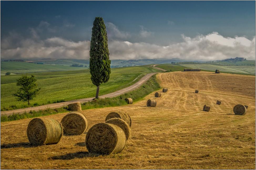 Field in summer.jpg