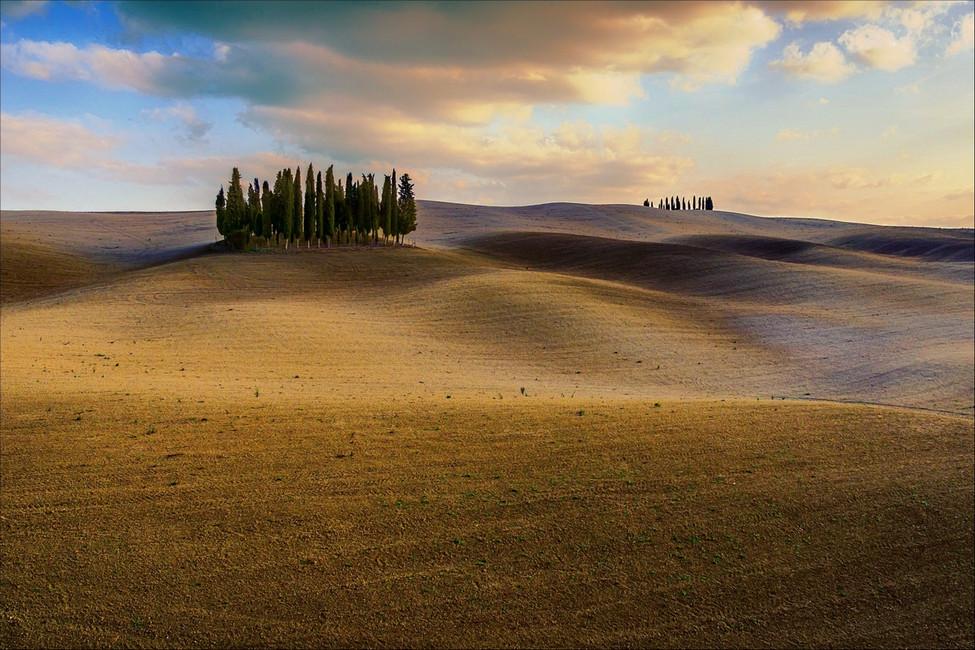 Fields and trees III.jpg