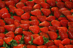 Louisiana Strawberries