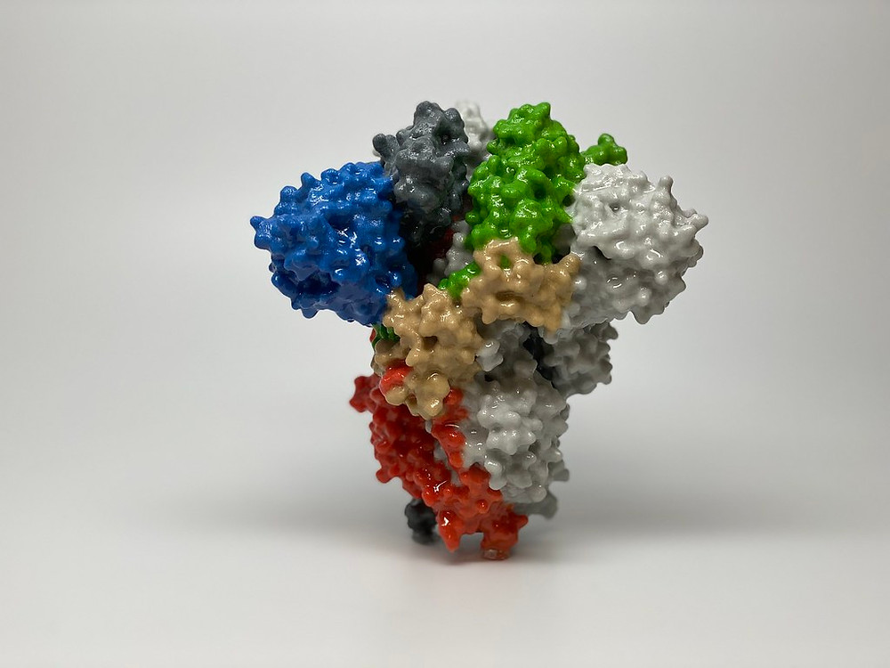 picture of Corona virus spike protein