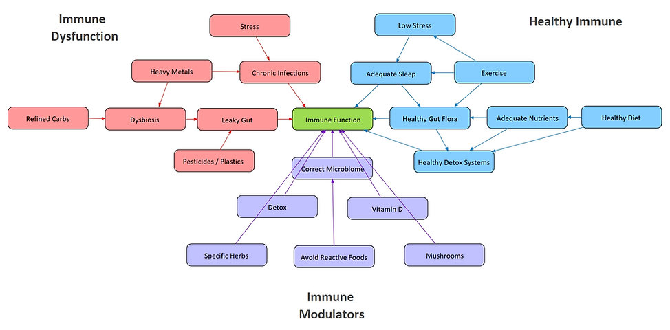 Immune Regulation.jpeg