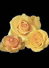 flower copy.png